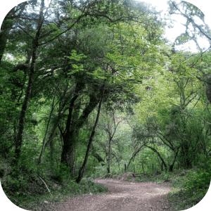 Selva pedemontana