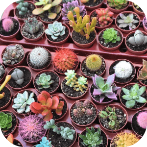 Feria de las plantas